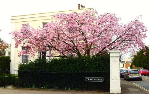 blossommingtree